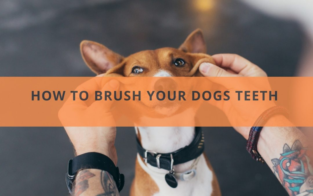 How to Brush Your Dogs Teeth and Some Tips