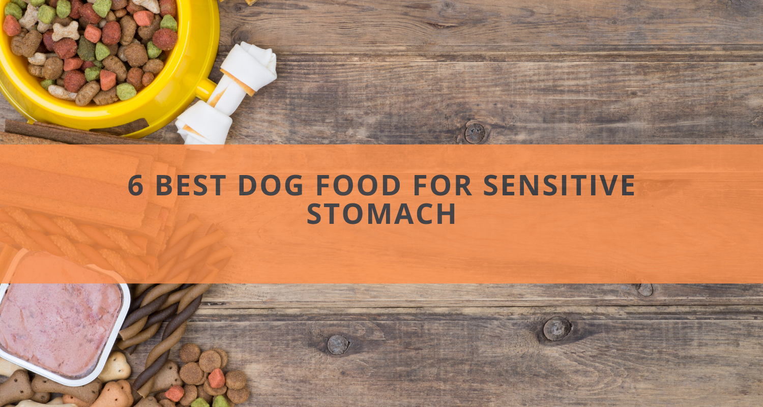 6 Best Dog Food for Sensitive Stomach