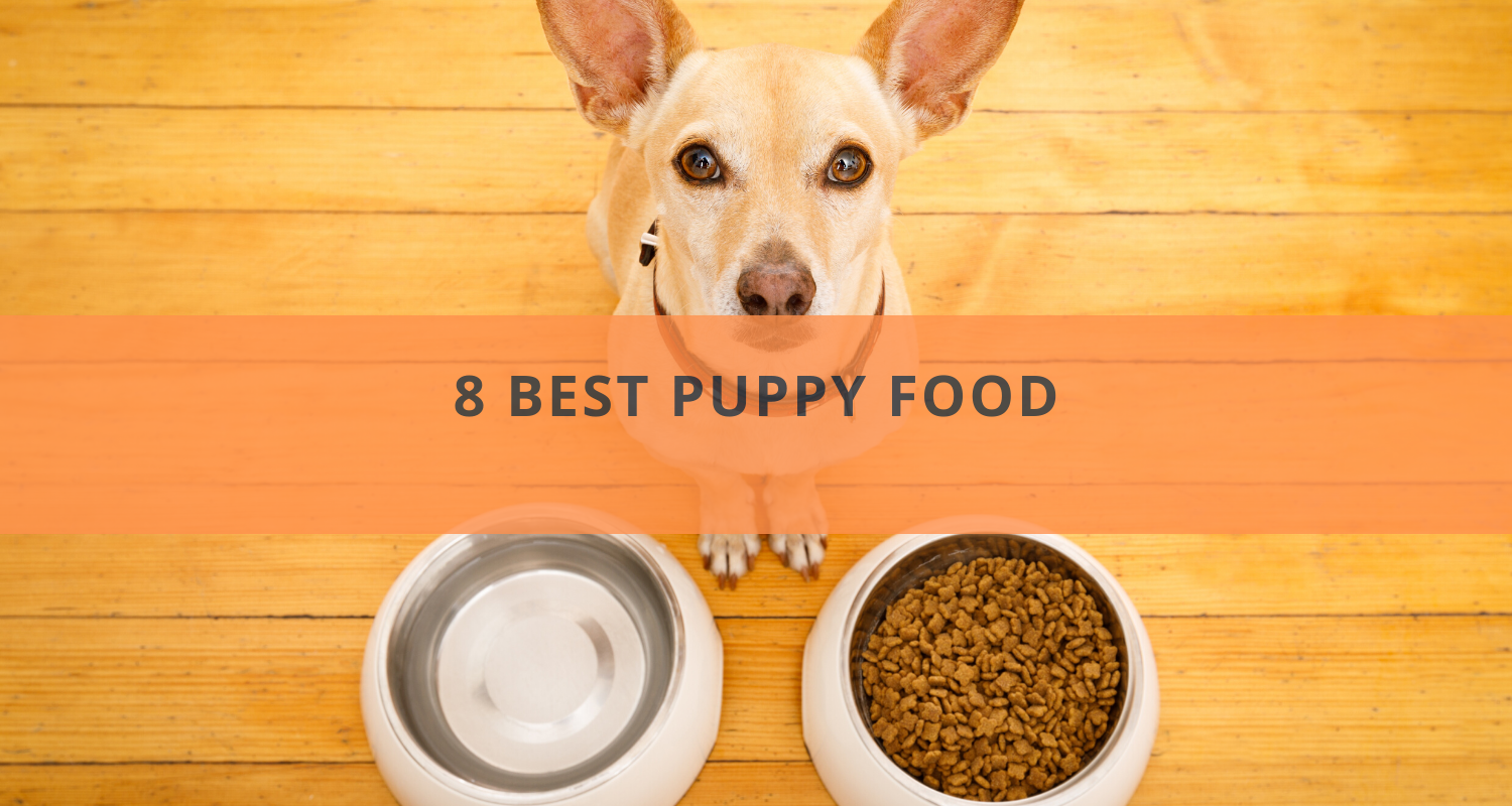 8 Best Puppy Food