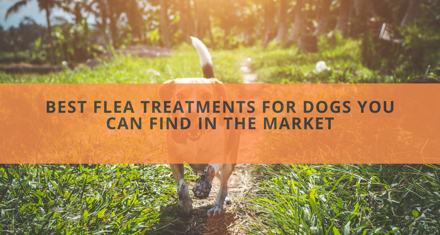 The 6 Best Flea Treatments for Dogs You Can Find in the Market