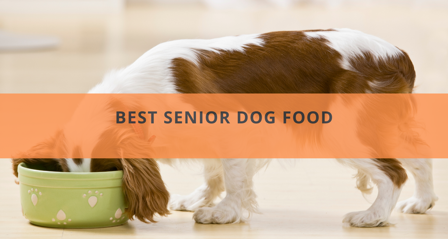 6 Best Senior Dog Food