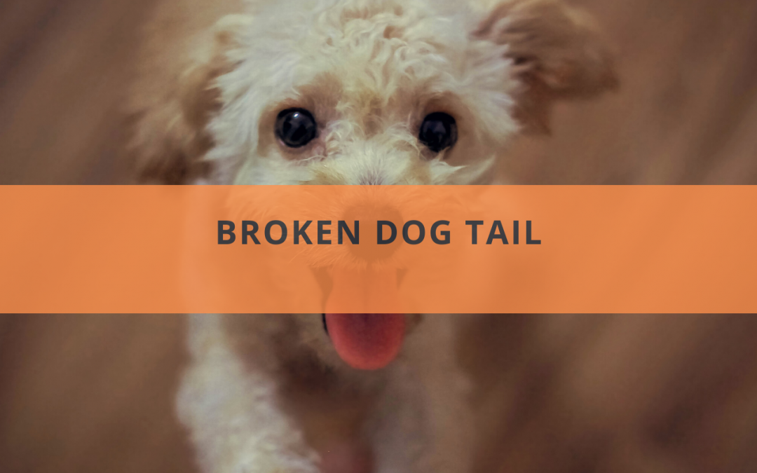 Broken Dog Tail: Symptoms, Causes, Treatments, and Prevention