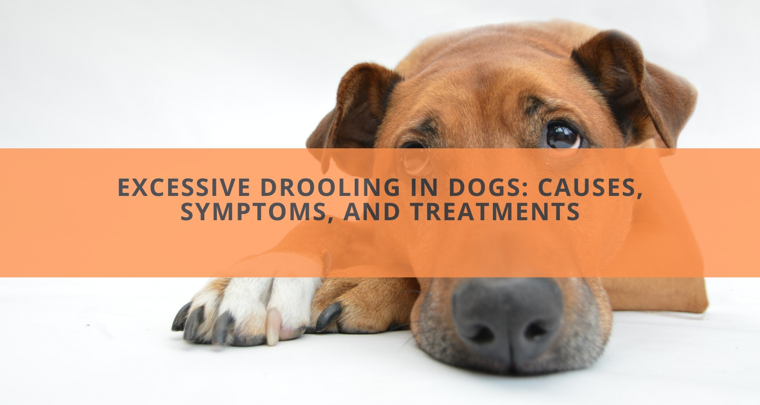 Excessive Drooling in Dogs: Causes, Symptoms, and Treatments