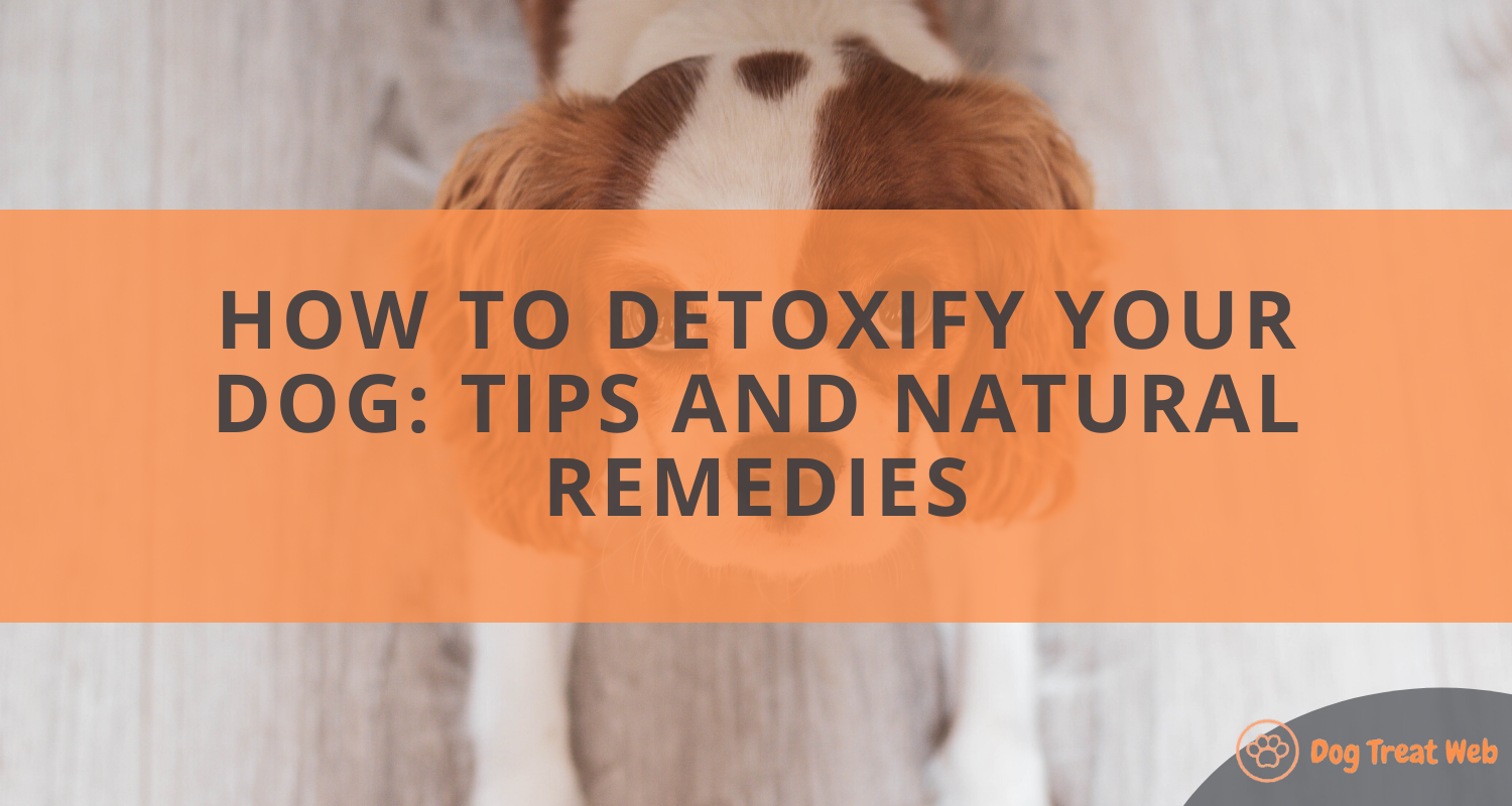 How to Detoxify Your Dog