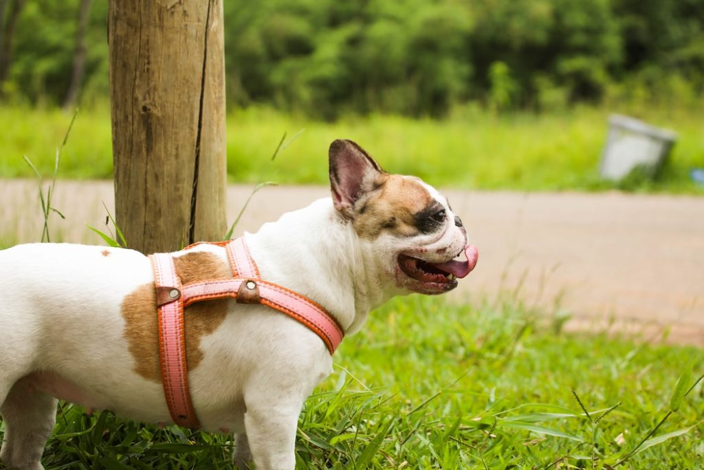 are fats and oils good for dogs