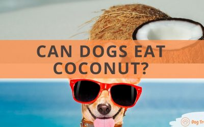 Can Dogs Eat Coconut?