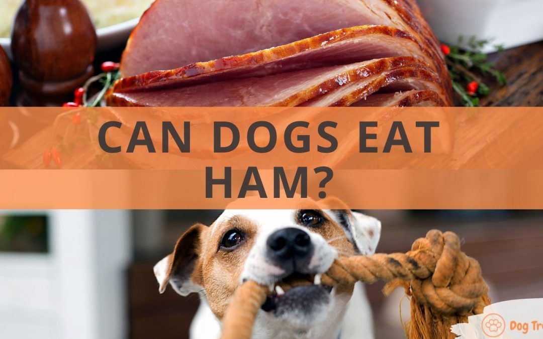 Can Dogs Eat Ham?