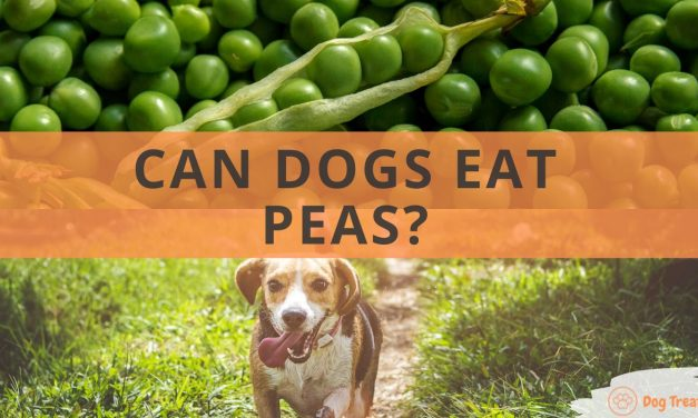 Can Dogs Eat Peas?