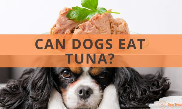 Can Dogs Eat Tuna?