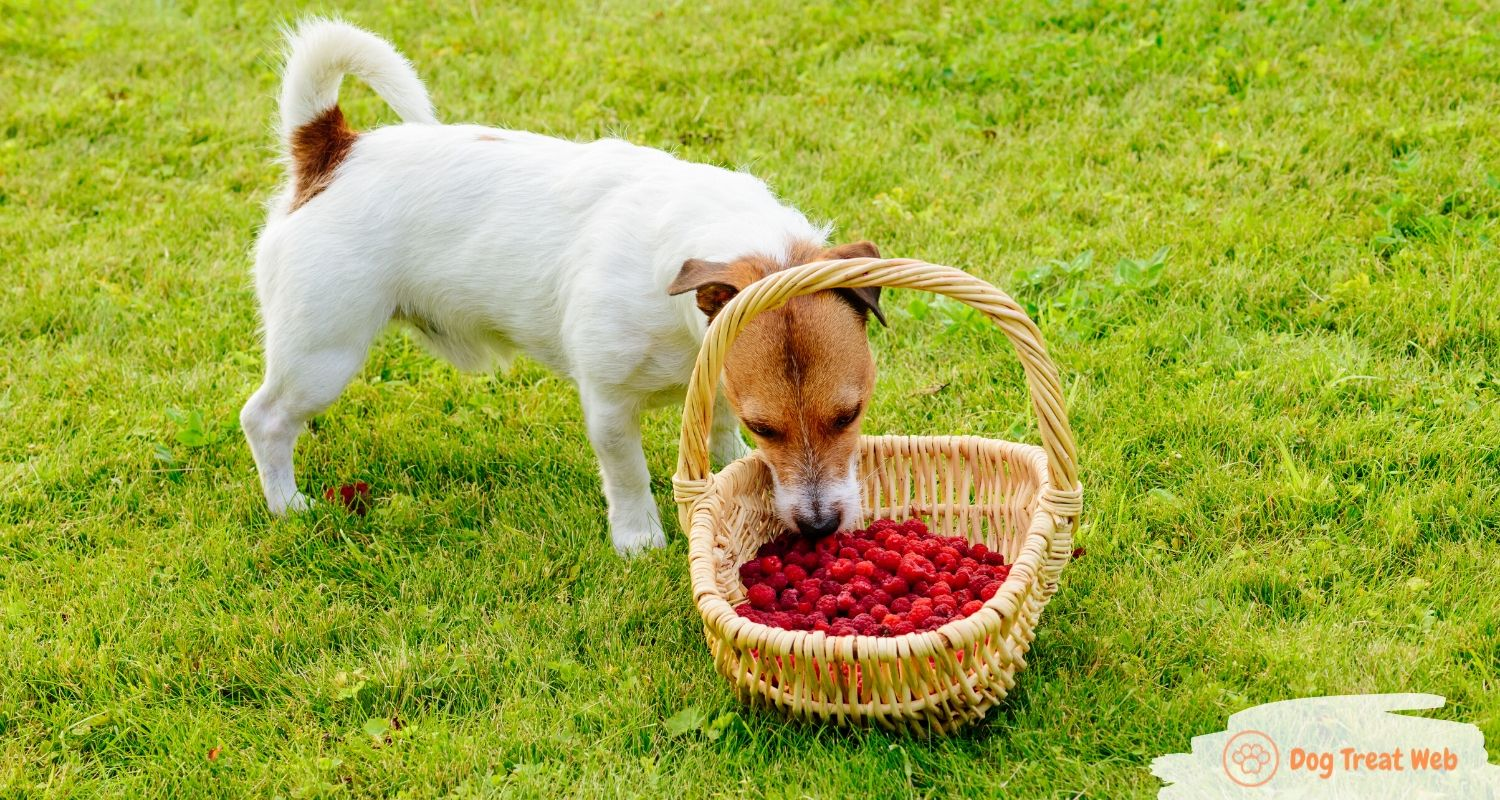 Benefits of raspberries for dogs_ can dogs eat raspberries