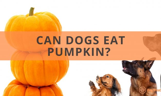 Can Dogs Eat Pumpkin? Dogs need their Halloween treats, too!
