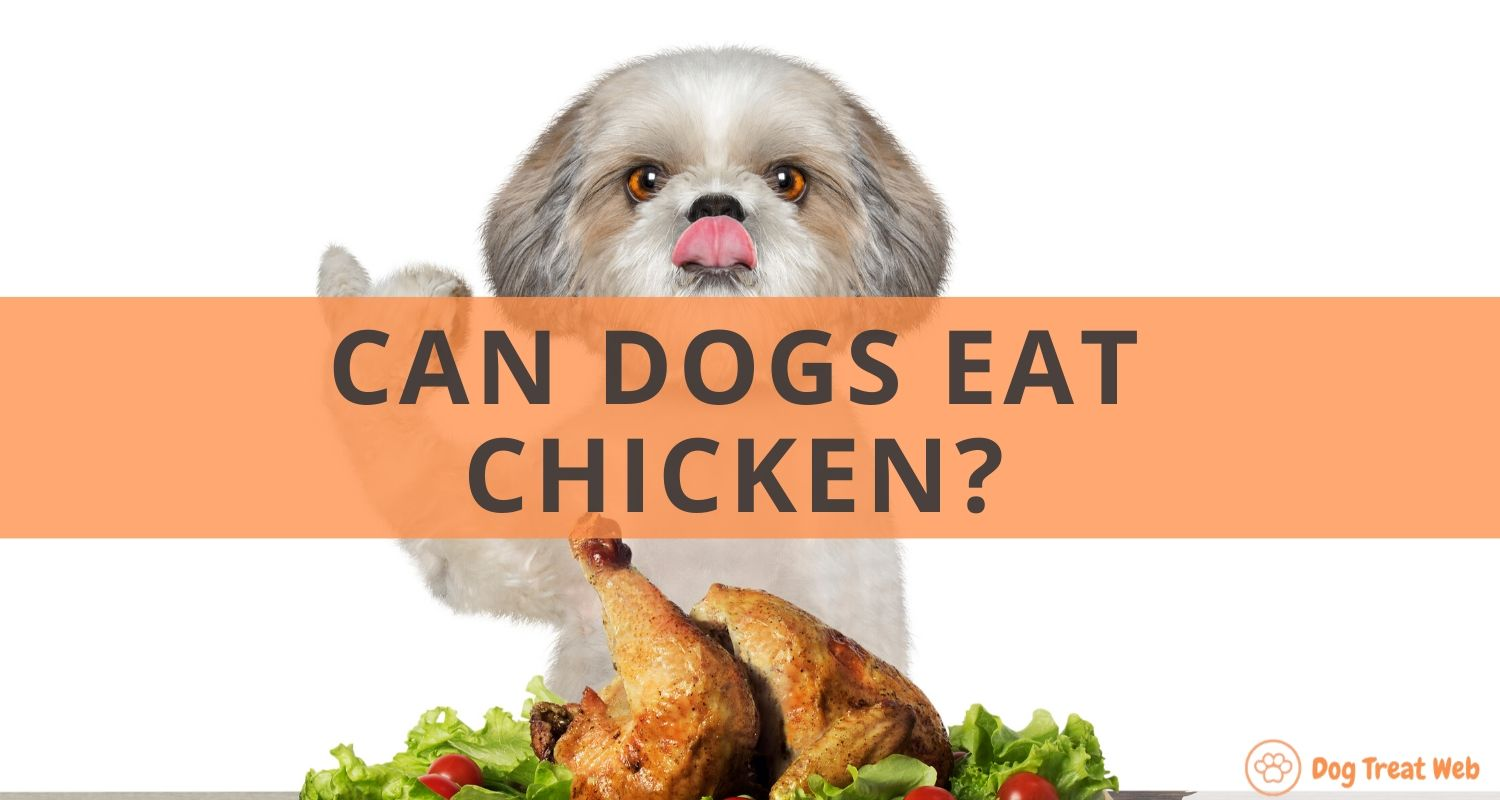 Can Dogs Eat chicken (2)