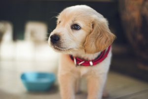 are peanuts harmful to dogs