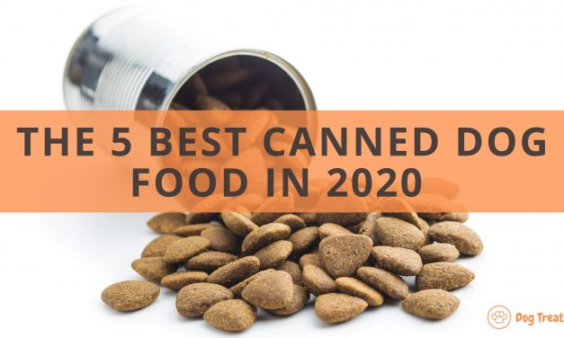 The 5 Best Canned Dog Food