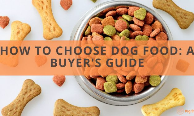 How to Choose Dog Food: A Buyer's Guide