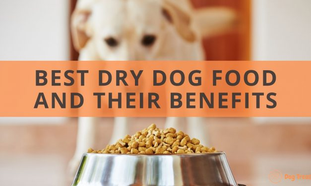 The 7 Best Dry Dog Food