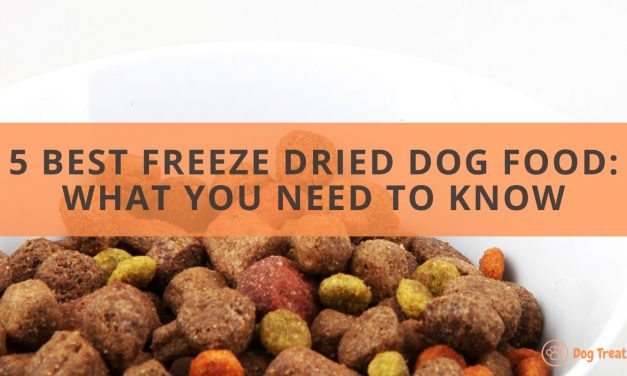 The 5 Best Freeze Dried Dog Food: What You Need to Know