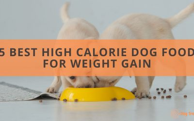 The 5 Best High Calorie Dog Food for Weight Gain