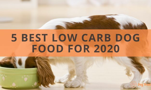 5 Best Low Carb Dog Food: What You Need to Know About Carbs