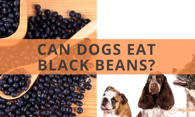 Can Dogs Eat Black Beans?