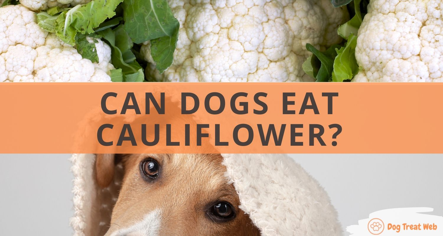 can dogs eat cauliflower (1)