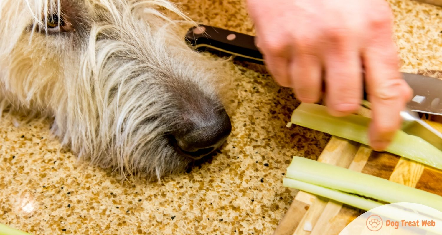 can dogs eat celery pulp