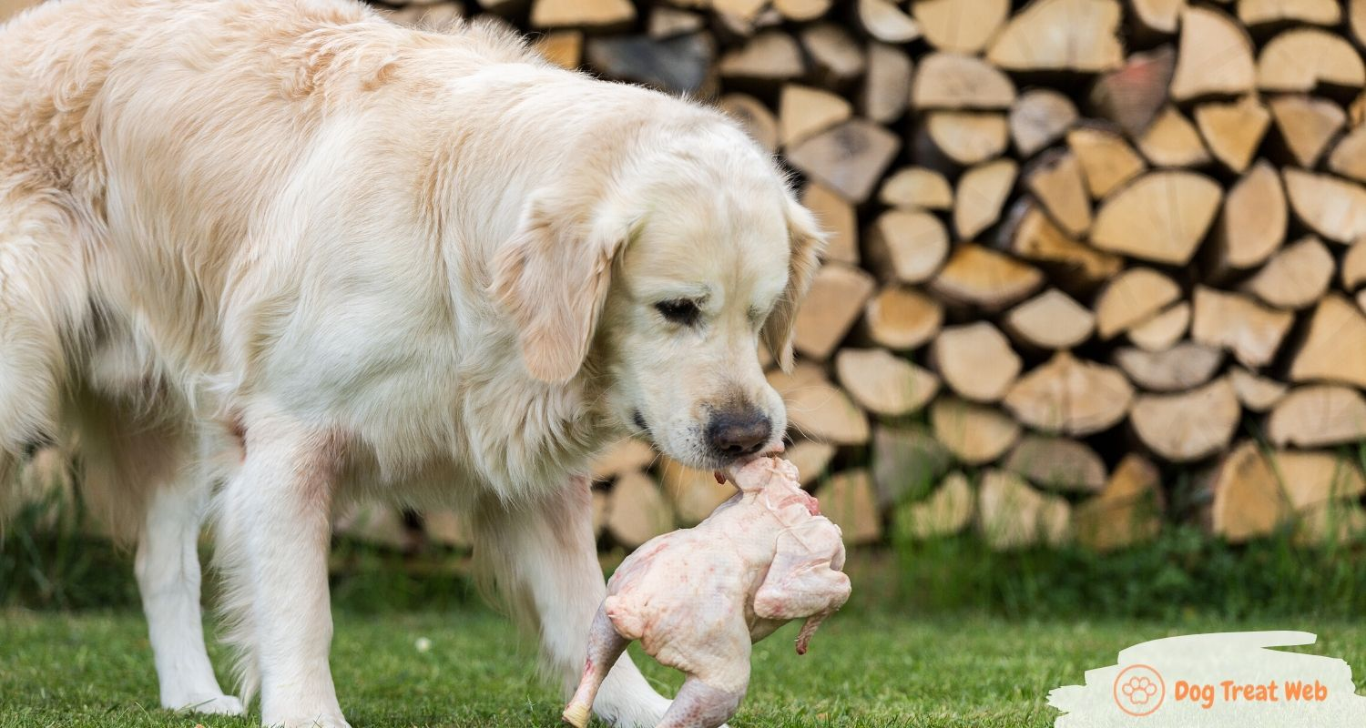 can dogs eat chicken