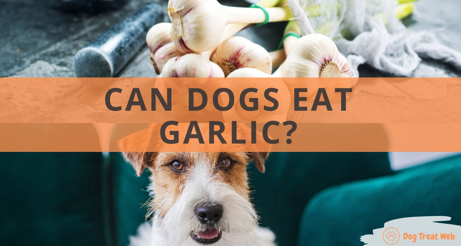 can dogs eat garlic