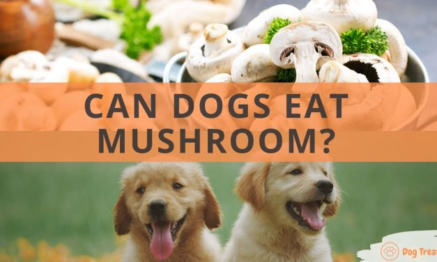 Can Dogs Eat Mushroom?