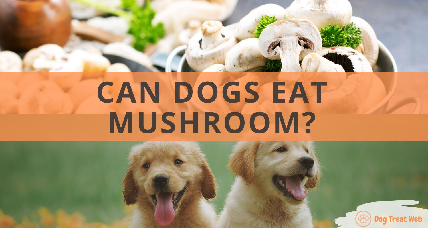 can dogs eat mushroom
