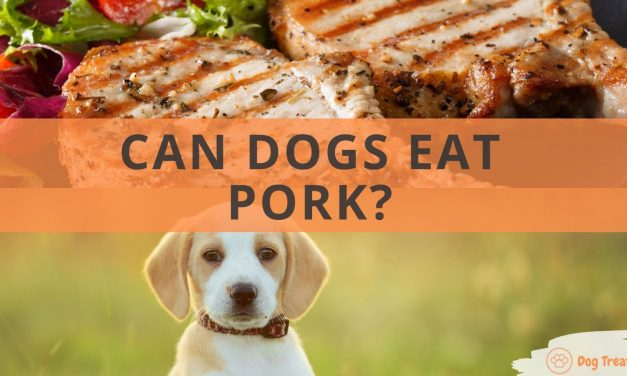 Can Dogs Eat Pork?
