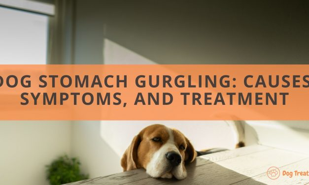 Dog Stomach Gurgling: Causes, Symptoms, and Treatment