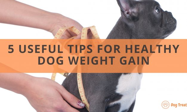 Dog Weight Gain: 5 Useful Tips and Notes