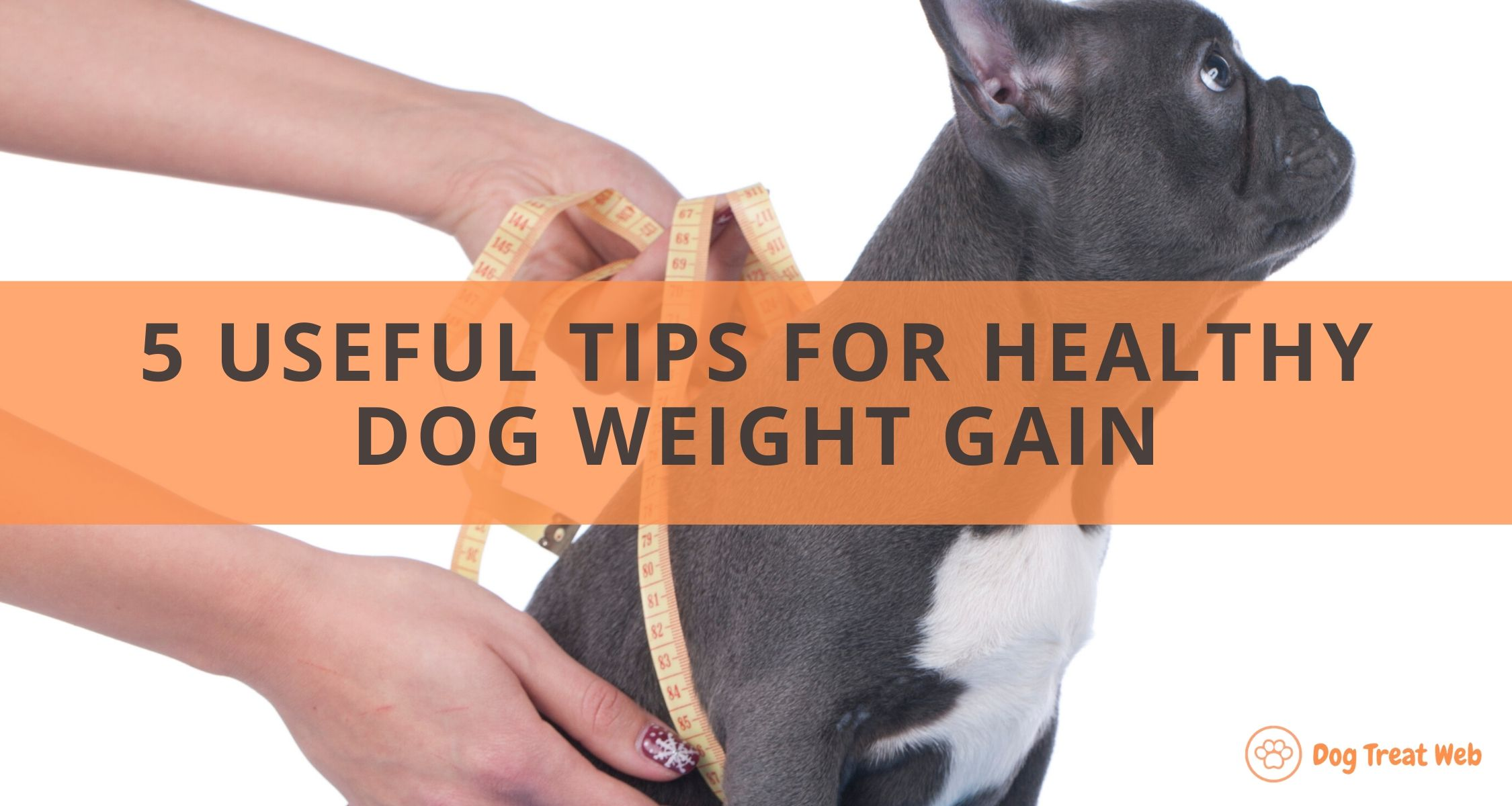 how to fatten up a dog fast