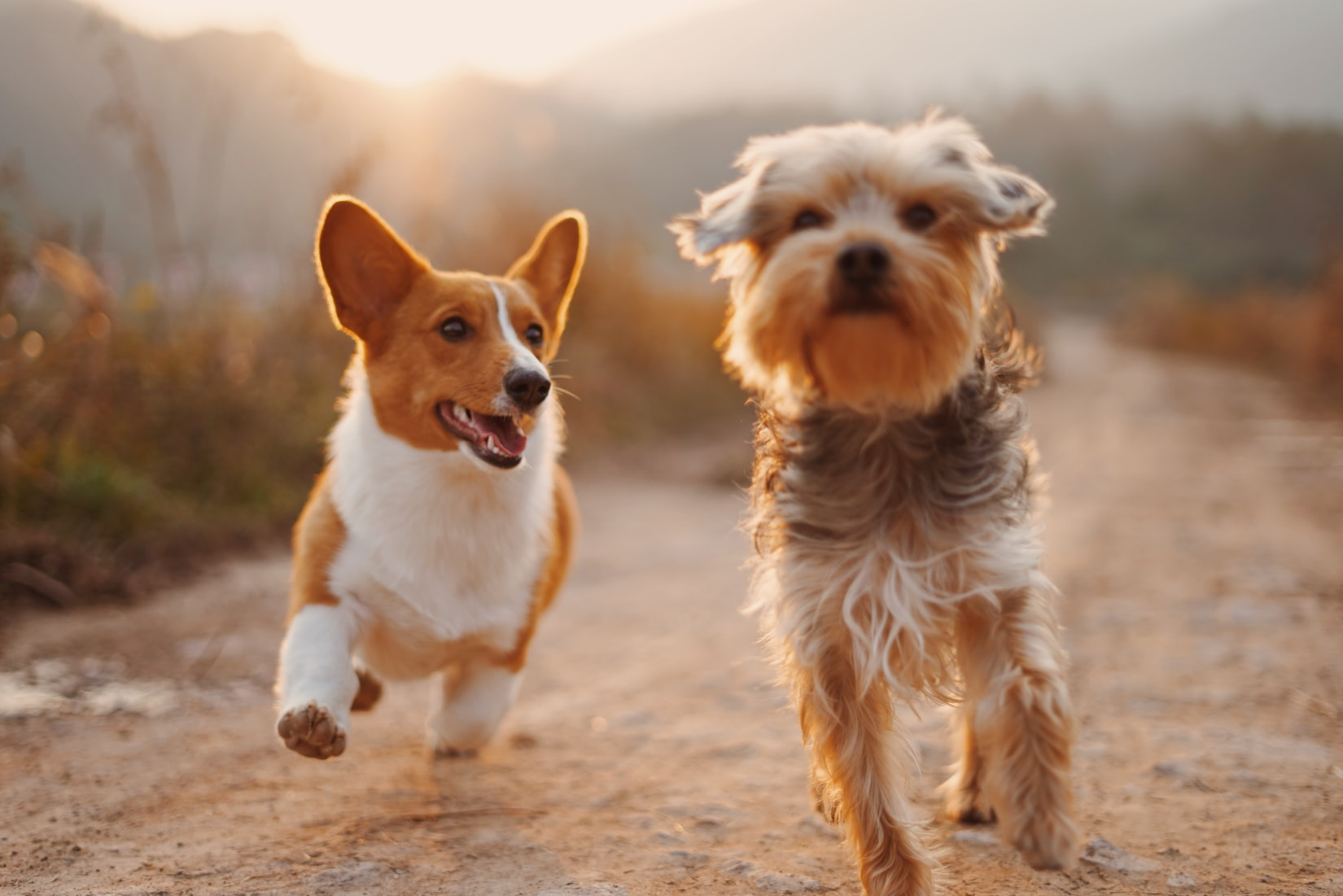 is popcorn safe for dogs