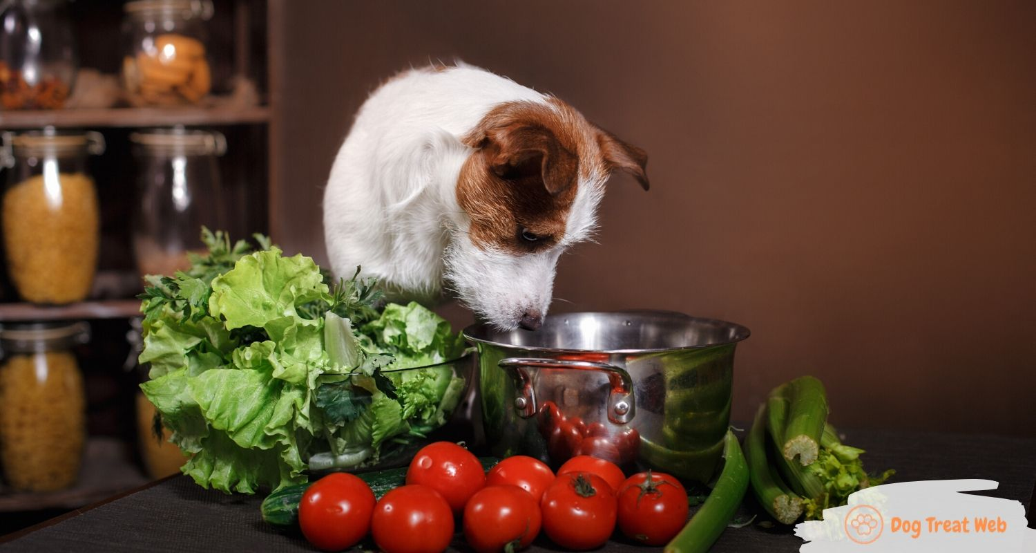 what vegetables can dogs eat (1)