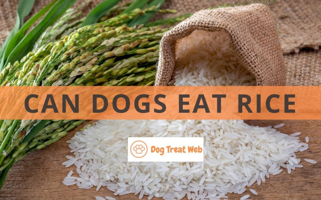 Can Dogs Eat Rice