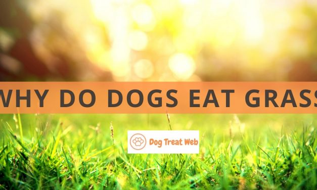 Why do dogs eat grass? Here's How to Prevent It