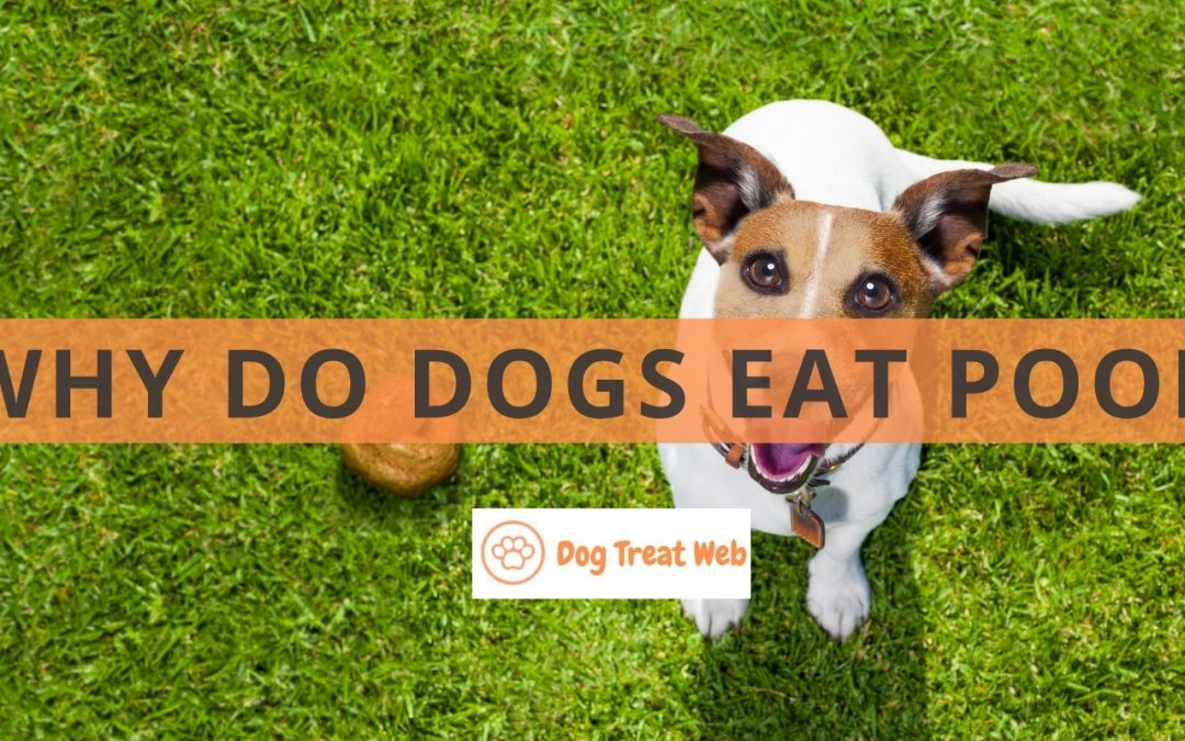 Why do dogs eat poop? Here's How to Deal with this Disgusting Behavior!