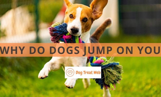 Why do dogs jump on you? Here's the Best Way to Deal with it