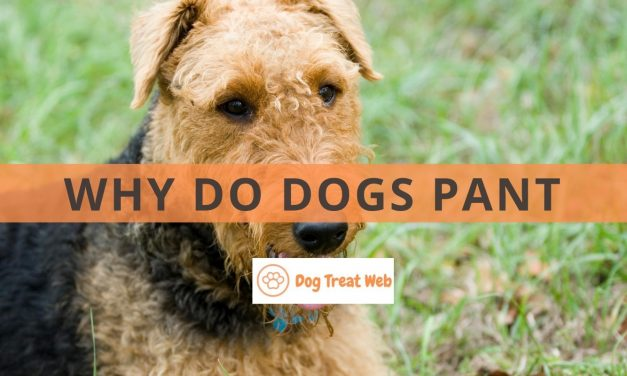 Why do dogs pant and when you should worry