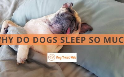 Why do dogs sleep so much? Here's why your pet loves slumber!