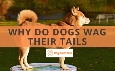 Why do dogs wag their tails? Discover the meanings behind this gesture!